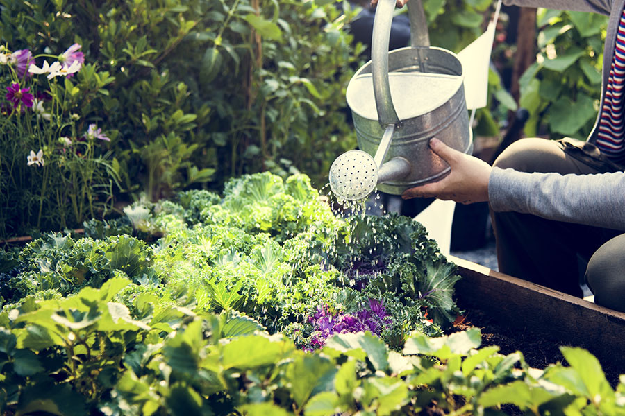woman-watering-organic-fresh-agricultural-product